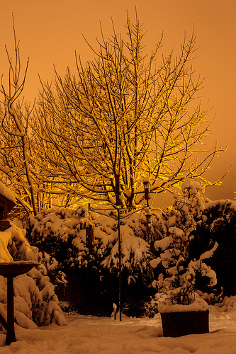 Garden At Night In Snow